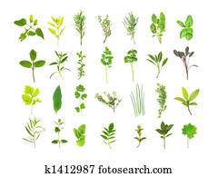 Large Herb Leaf Selection