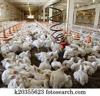 Poultry Farm Stock Images | Our Top 1000+ Poultry Farm Photos