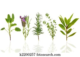 Herb Leaf Selection