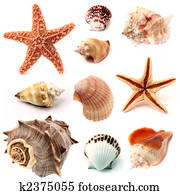 seashells and starfish set
