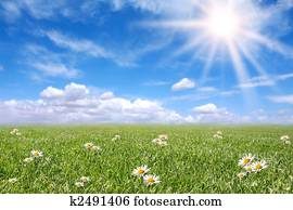 Serene Sunny Field Meadow in Spring