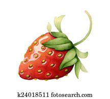 Strawberry. Watercolor