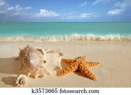 sea shells starfish tropical sand turquoise caribbean