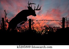 Whitetail Buck Deer's Sunset Leap