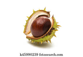 fruit chestnut