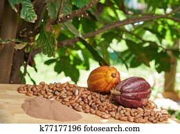 Different types of cacao