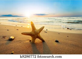 Starfish on the sunny summer beach