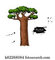 Baobab tree vector drawing. Isolated hand drawn botanical illus