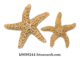 Starfish Over White