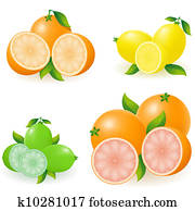 set of citrus orange lemon lime grapefruit illustration